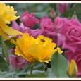 薔薇とハチ